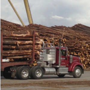 Cover photo for Timber Industry in North Carolina Contributed Over $900 Million in 2016