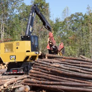 Image of logging