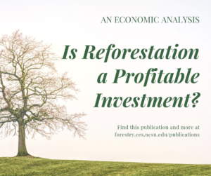 Cover photo for Is Reforestation a Profitable Investment?