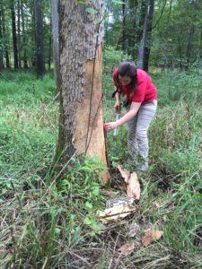 Dr. Kelly Oten in the field examining a tree