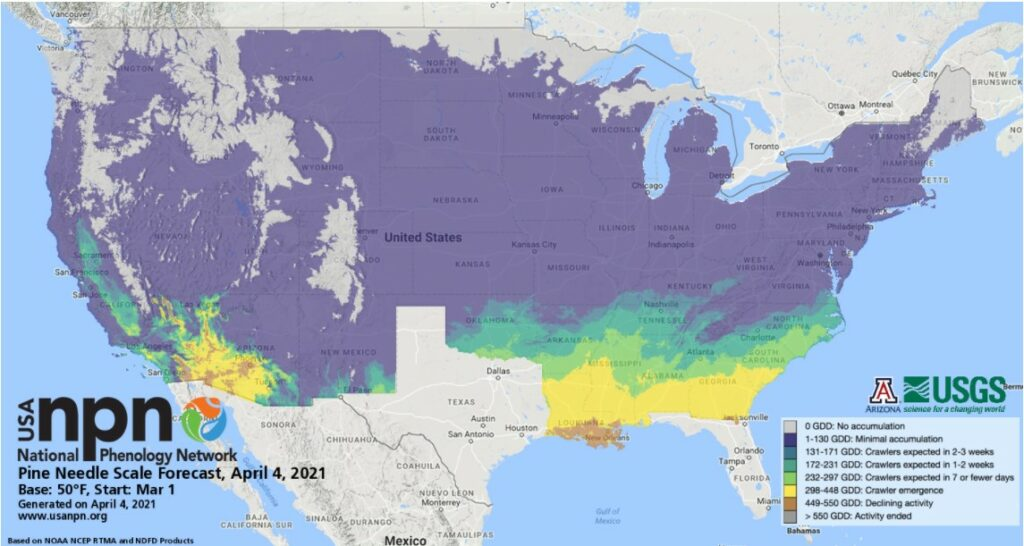 A map of the US, showing areas warming up where pine needle scale will be emerging soon.