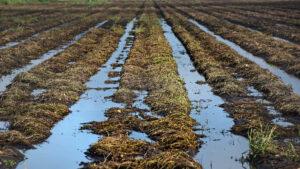 A flooded farm field in North Carolina.